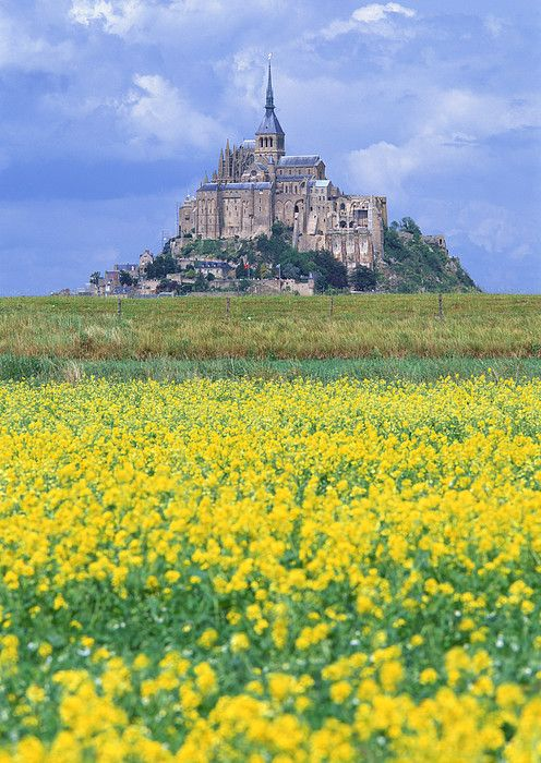 Mustard Fields of Mont Saint Michel