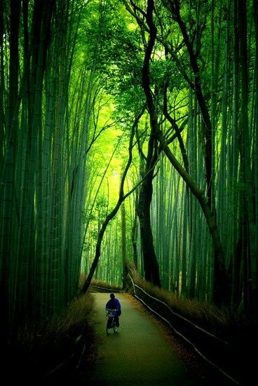 Bamboo Forests of Kyoto