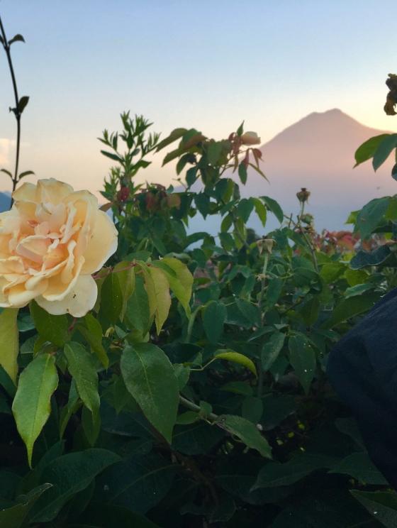 Rose Garden + Volcan Agua