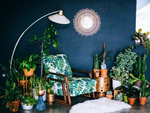 House Plant Dreams