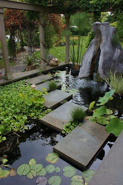Lily Pond Heaven