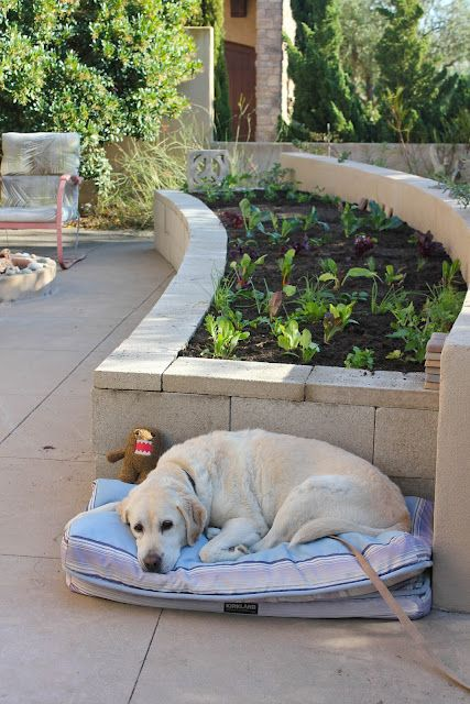 Curved Garden Beds